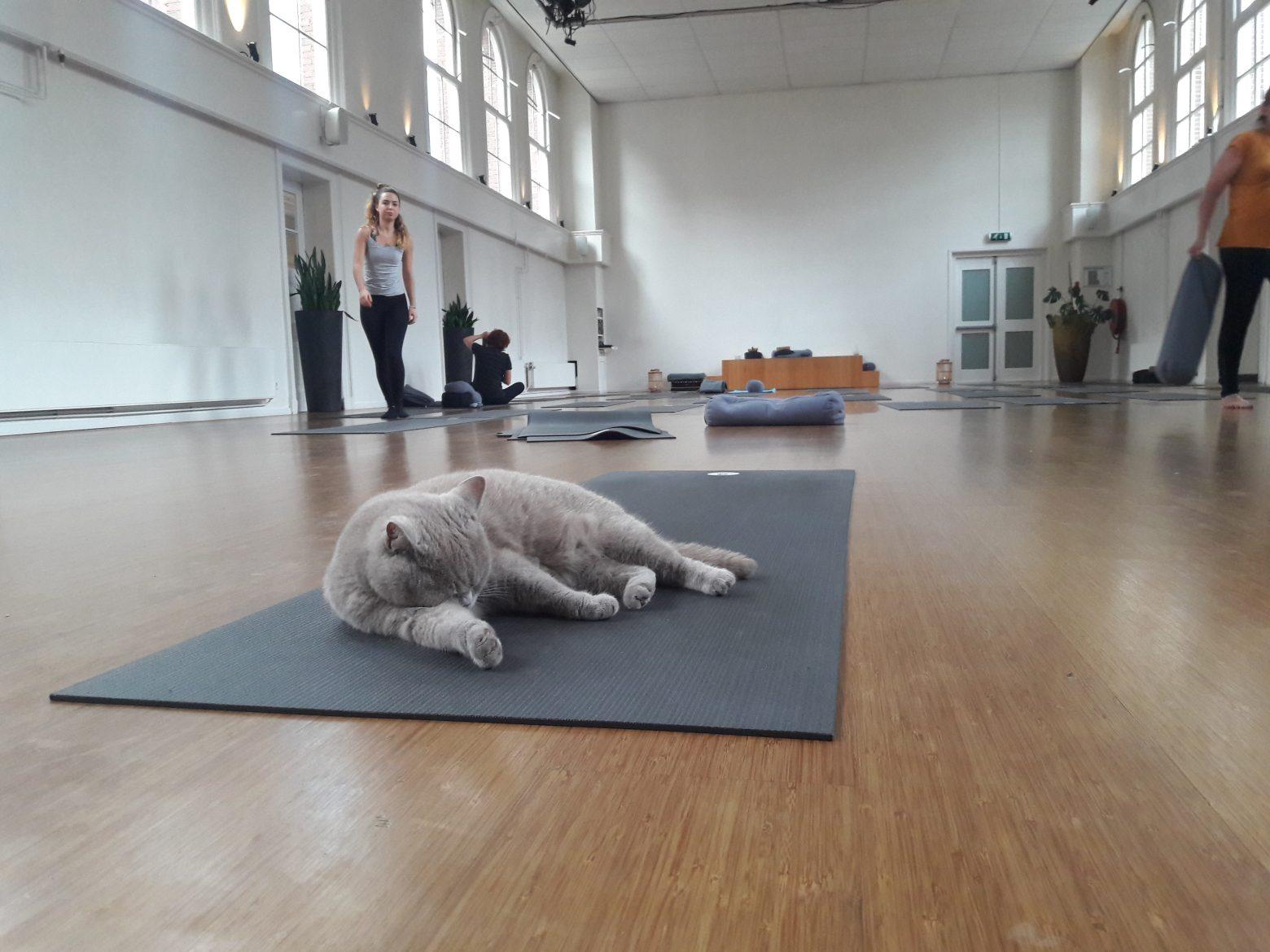 My OneFit Week- Saturday, Restorative Yoga at De Nieuwe Yogaschool